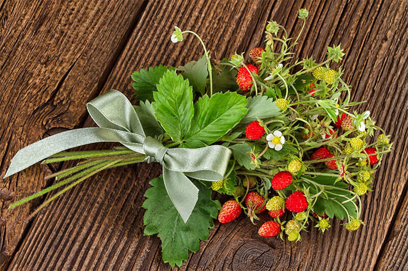 Woodland strawberries make beautiful desserts and bouquets.