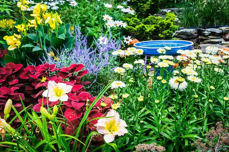 Colorful plants and a birdbath are welcoming sights to wildlife.