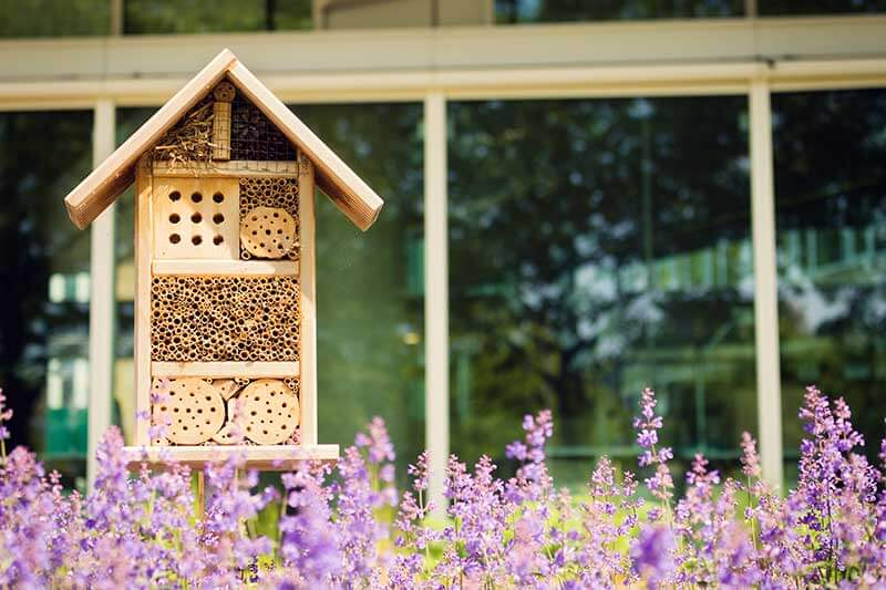 Insect hotels and butterfly houses provide extra shelter for pollinators.