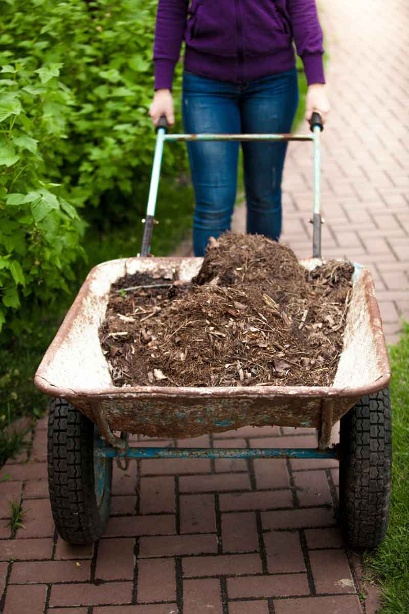 Gardening for Exercise and Enjoyment