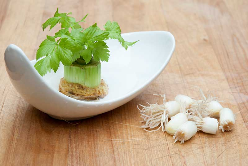 The rooted base of onion and celery grow quickly in shallow water.