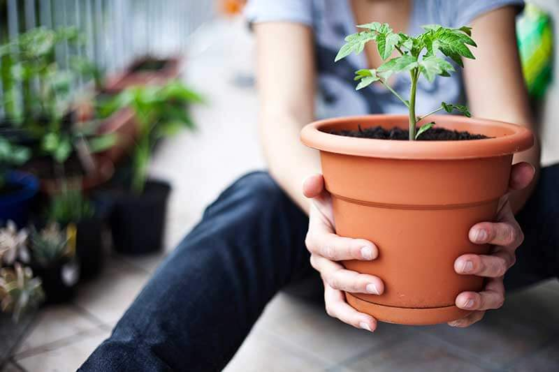 Most edible plants will grow well in containers done right.