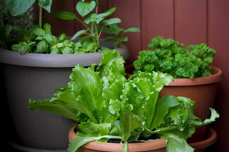 Salad bowl container gardens provide a steady supply of greens.