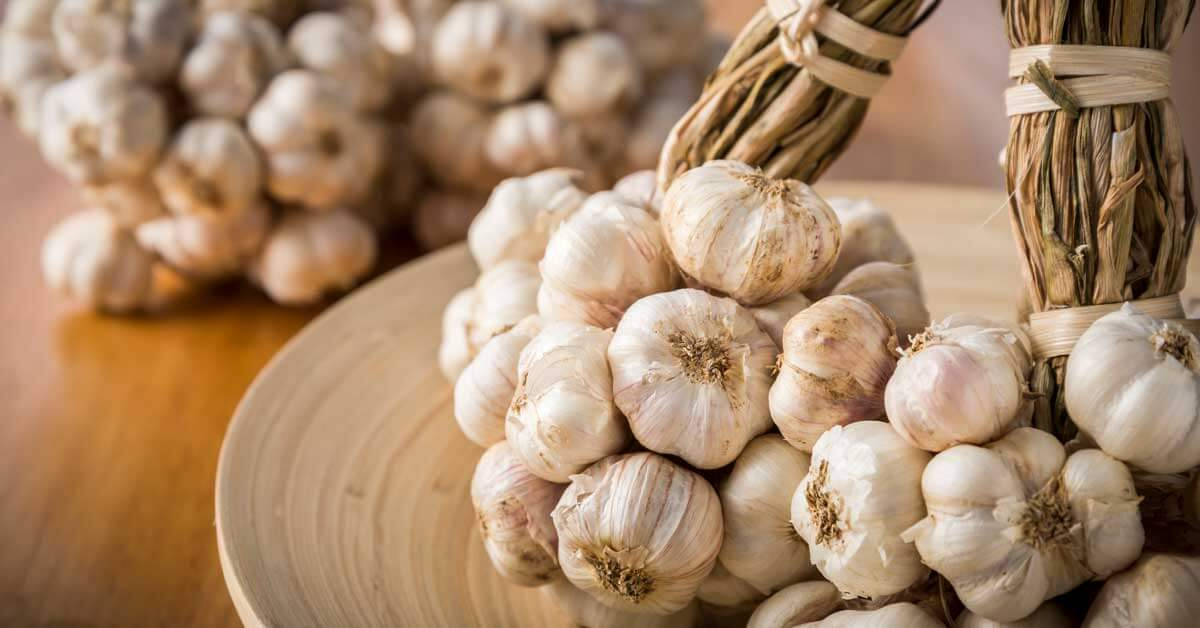 Growing Delicious Homegrown Garlic (AKA Fall Is for Garlic!) Header and OG