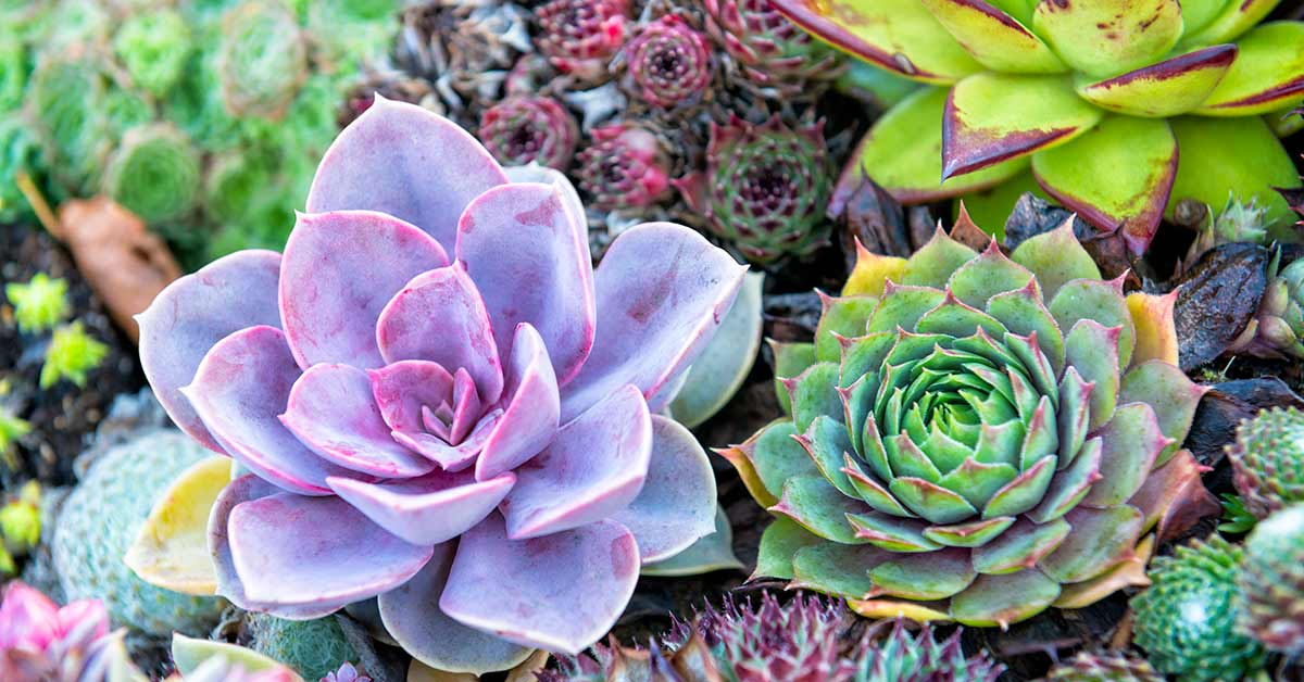 How To Grow Succulents From Leaves And Stem Cuttings