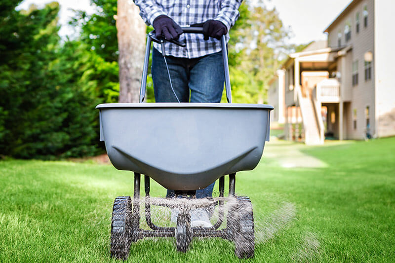 Lawn spreader applying pesticide granules on grass