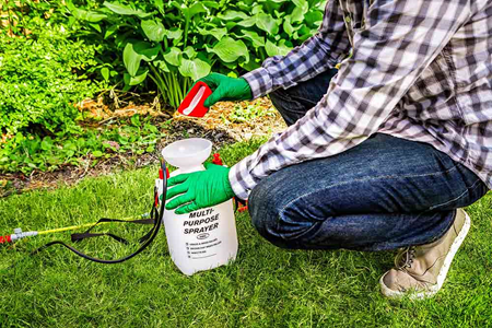 Keep fungal disease out of your garden - Daconil® Fungicide