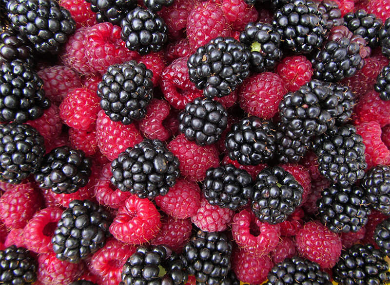 Caneberries, such as blackberries and raspberries, provide tasty fruits for you and your family, and provide treats for birds and butterflies.