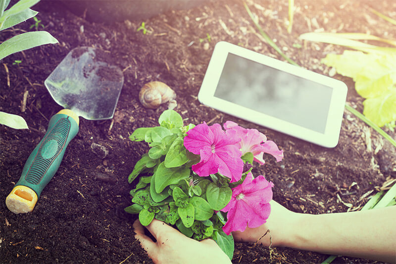 Some gardeners opt for electronic approaches to journaling and documentation.